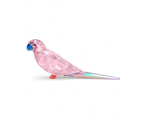 SWAROVSKI Jungle Beats Pink Parakeet Cha Cha